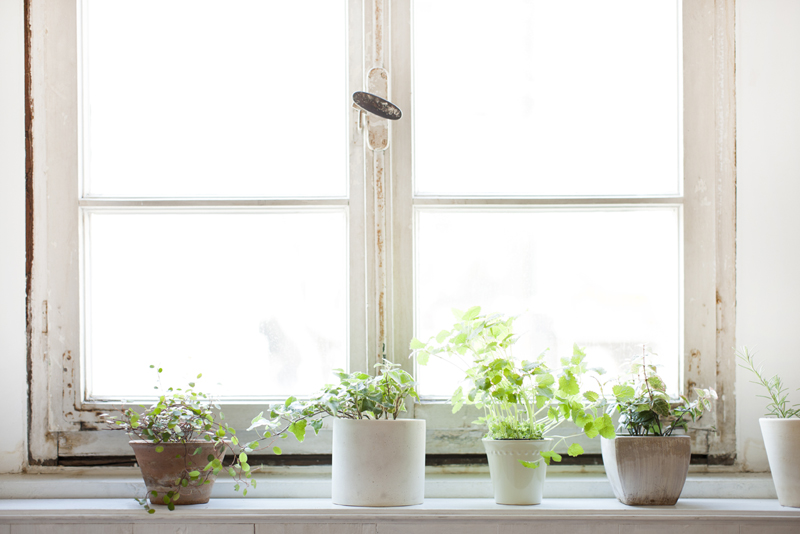 Plants-on-window-why-declutter-and-organize